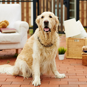 Keeping you dog stress-free when you move home