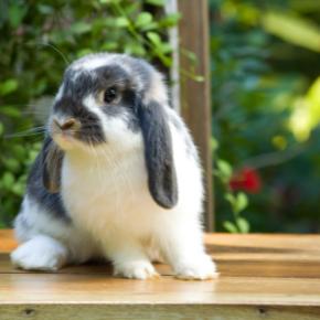 Sept 21_Rabbit