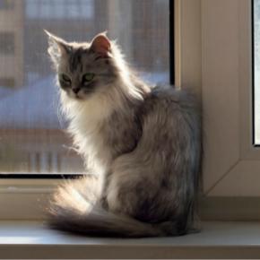 Sept 21_Cat