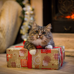 Our festive gift ideas for happy cats