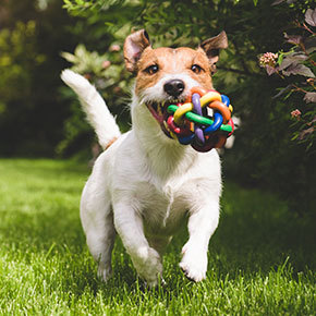 Pep up your pooch with play tips from [[practice_name_short]]