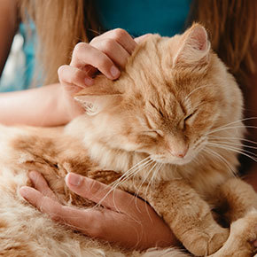 [[vet1_forename]]'s tips for spotting feline arthritis