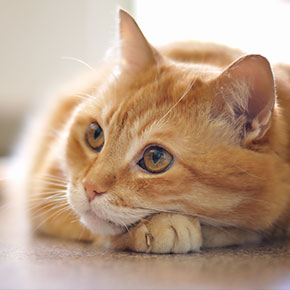 Tackling parasites in cats