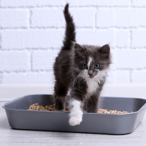 Cat litter training basics