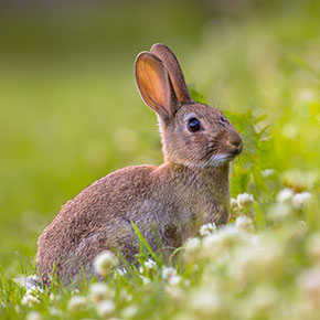 Might your rabbit have an allergy?