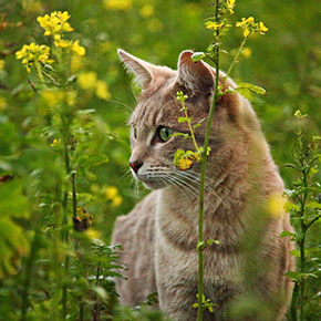 Poisonous plants to keep away from cats at Christmas
